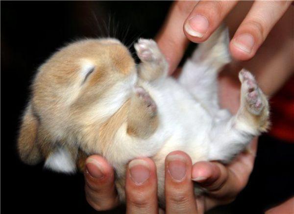 Sleeping Bunny – 1Funny.com