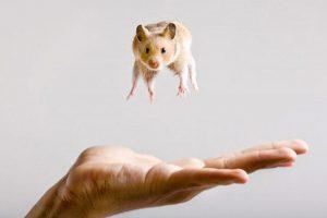 hamster-in-air