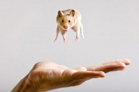 Hamster in the Air