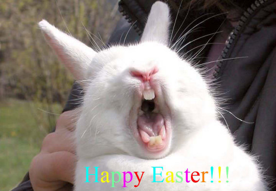 Image result for happy Easter cat images