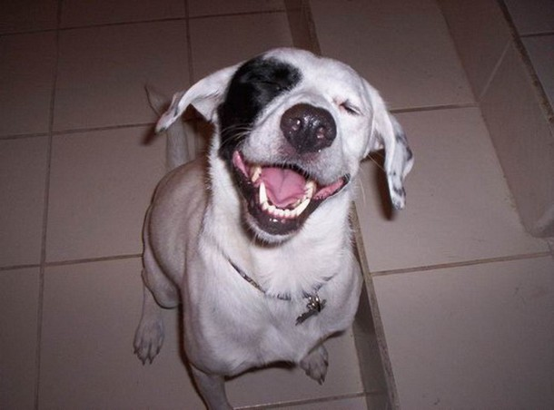 Laughing Dog – 1Funny.com