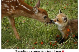 spring-love