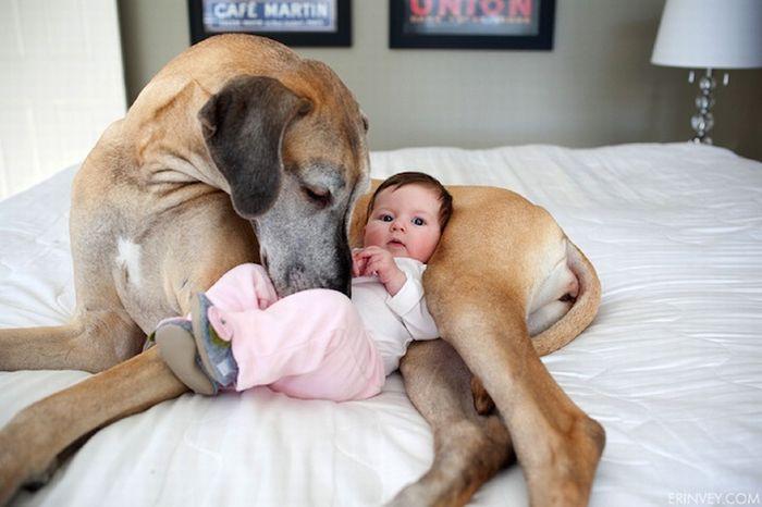 Babysitter dog 1funnycom for Babysitter dog sitter