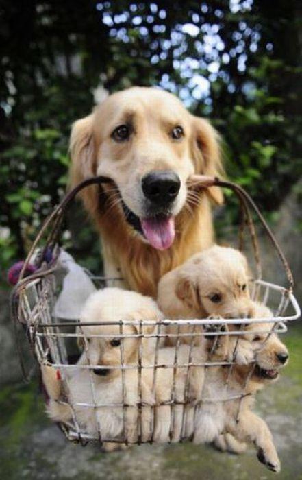 Basket of Puppies – 1Funny.com
