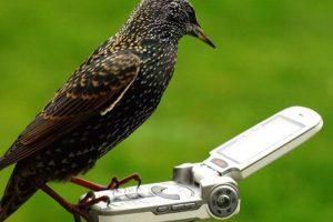 bird-call