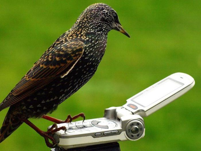 Bird Call – 1Funny com