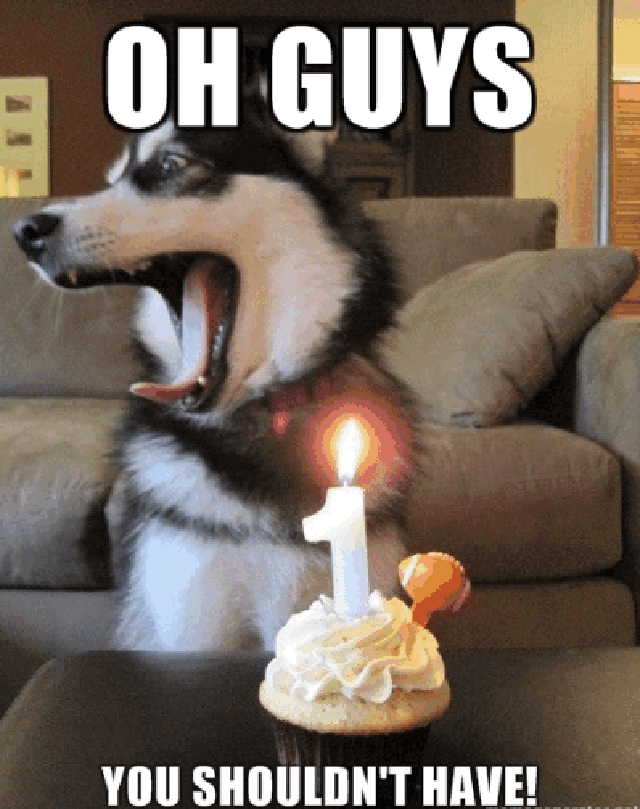 Funny Dog Meme Happy Birthday : Dog birthday quotes quotesgram
