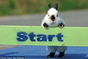 bunny-jump-1