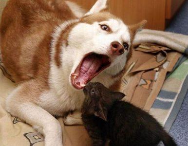 Dentist Cat