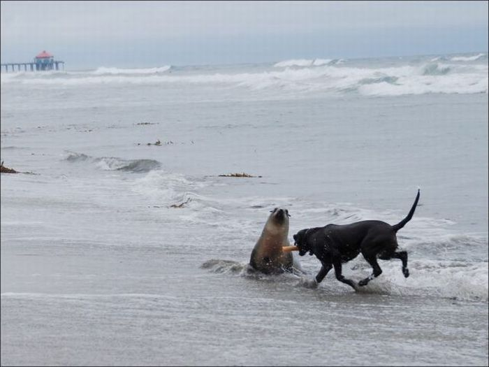 Dog Playing With Seal