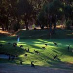 Kangaroo Golf Course