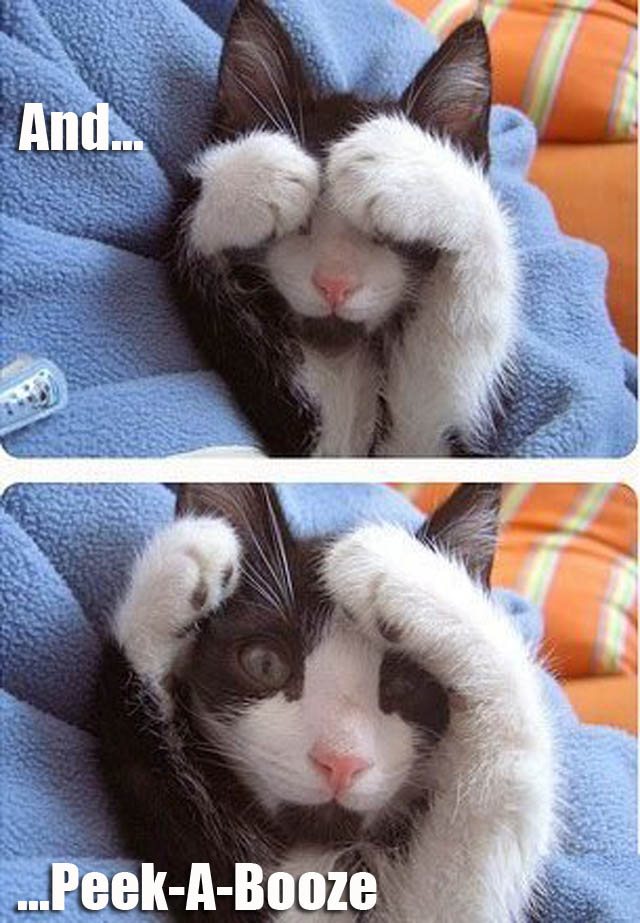 Funny Pictures With Captions Clean With Animals Peek-a-Booze – 1Funn...