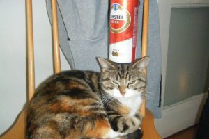 beer-can-cat