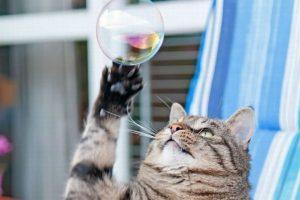bubble-cat