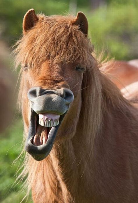 laughing horse � 1funnycom