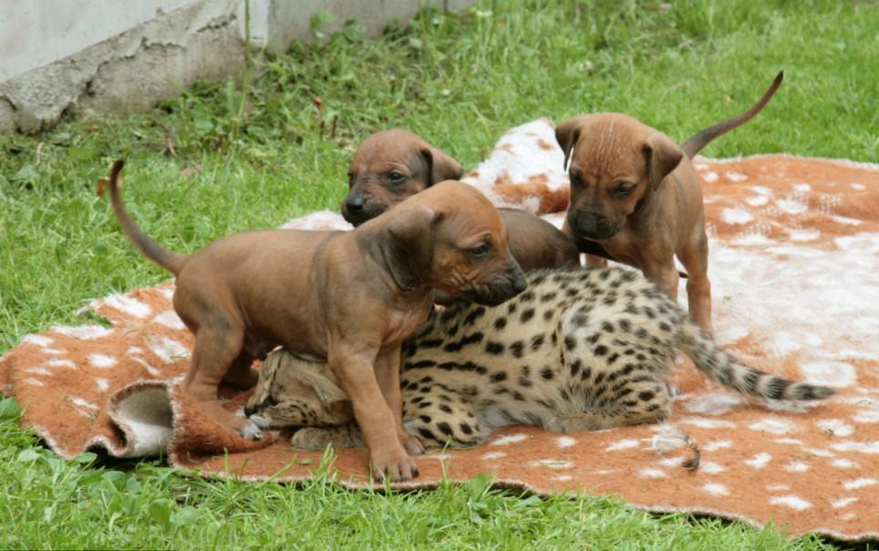 Kitten Finds Puppy Love