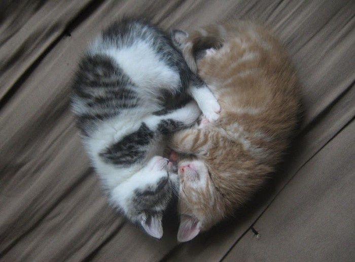 Cute Kittens Dancing while Sleeping - YouTube