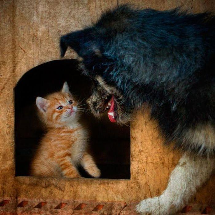 Not Scared Kitten – 1Funny.com