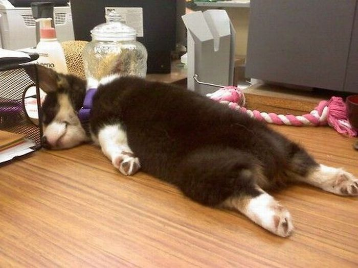 Proof That Sleeping Dogs Are Really Kinda Creepy - 20 Pics  Funny Sleepy Pups
