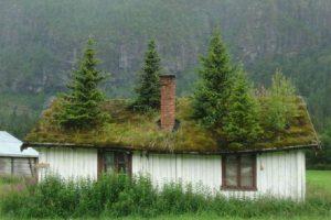trees-on-roof
