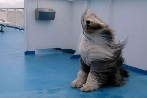 windy-dog