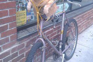 bike-cat