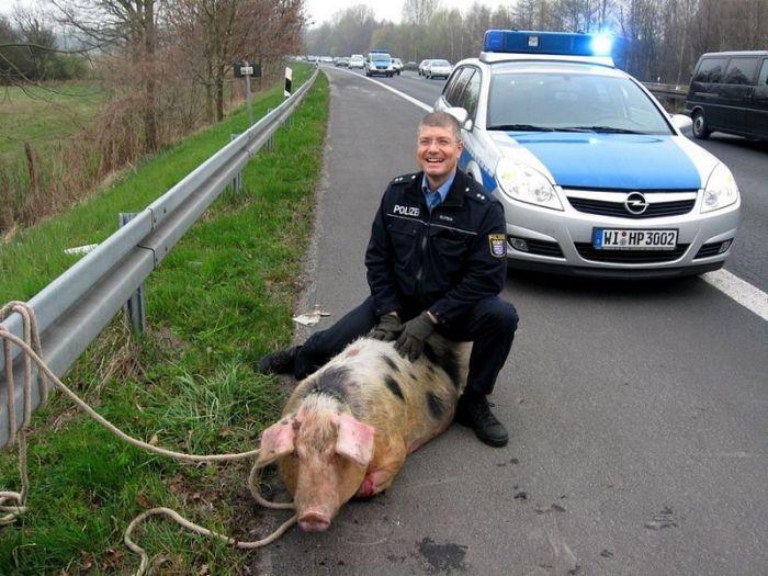 Caught a Pig – 1Funn...