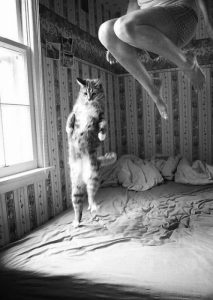 Jumping with the Cat