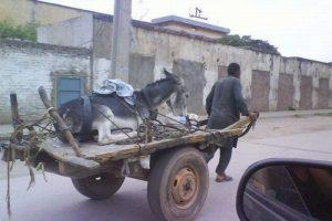 man-pulling-donkey