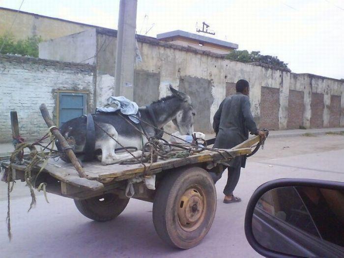 man-pulling-donkey.jpg