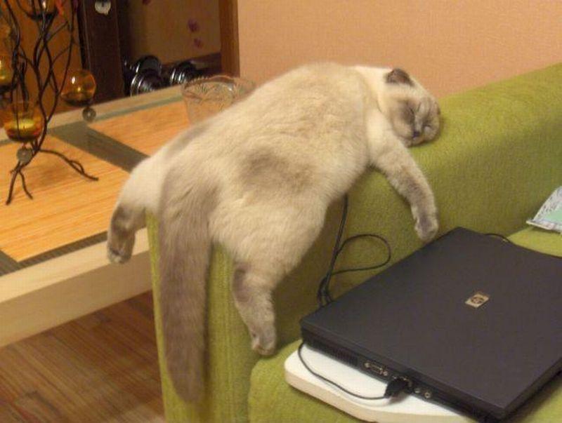 Can I Make It Reddit Cat Jump