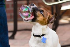 bubble-dog