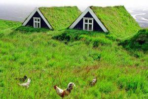 grass-roofs