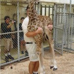 Giraffe Lifting
