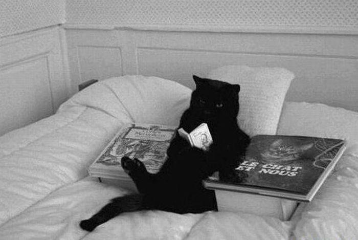 [Perdue] Adrian Ye Reading-cat
