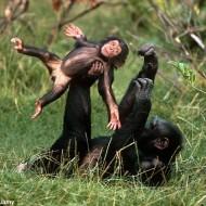 Monkeying Around 2