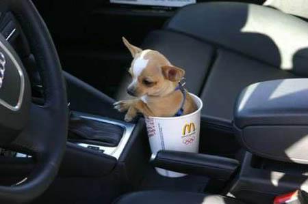 [Image: dog-cup-holder.jpg]