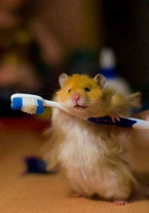 Hamster Toothbrush Holder – 1Funny.com