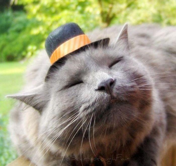 Cat Tiny Christmas Hat
