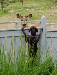 Neighbor Conversation