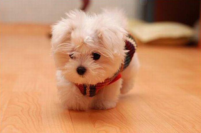 Tiny Puppy 2 1funny Com