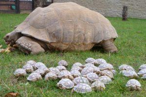 big-small-turtles