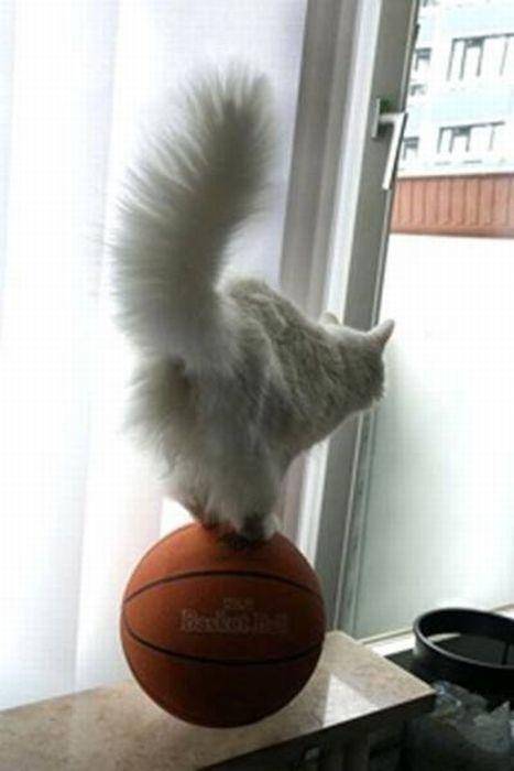 cat on a ball 1funny com