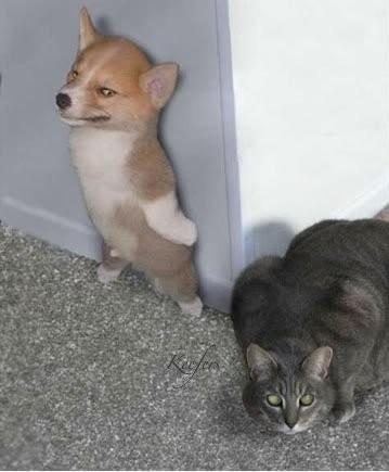 hiding-puppy-e1324735998972.jpg