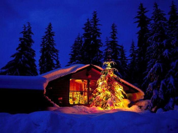Outdoor Christmas Tree – 1Funny.com