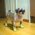 Dog Embarrassed by Ugly Shoes