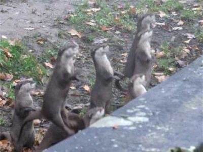 Jumping Baby Otters