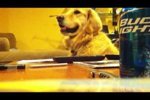 Dog's Got Rhythm