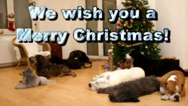 Dogs Decorating Christmas Tree