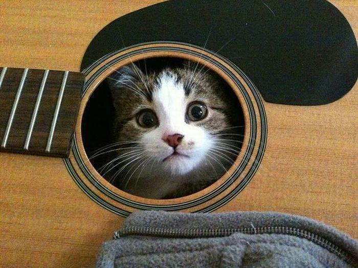 cat-guitar.jpg